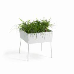 Green Pedestals, O2asis